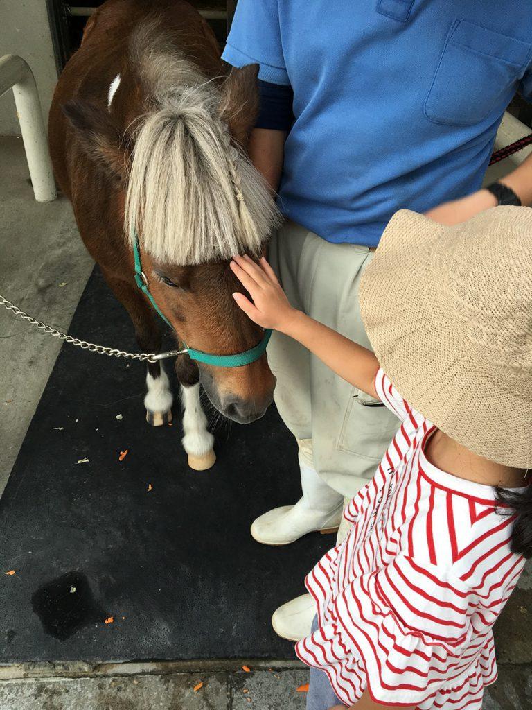 エサやりが終わると、ナデナデもさせてもらえます。私も触りましたが、馬の体って、凄く触りごこちがいいです。フカフカのスベスベであったかい。