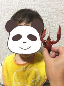 アメリカザリガニと次男(2歳)。