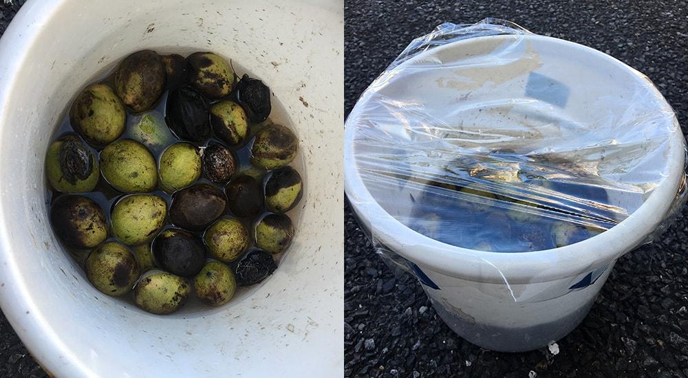 水の中でクルミの果肉を腐らせます