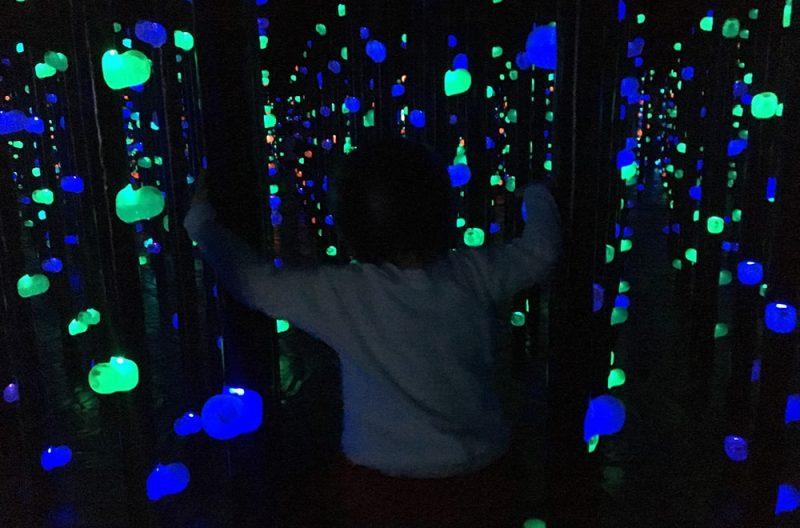 光の森の3Dボルダリング