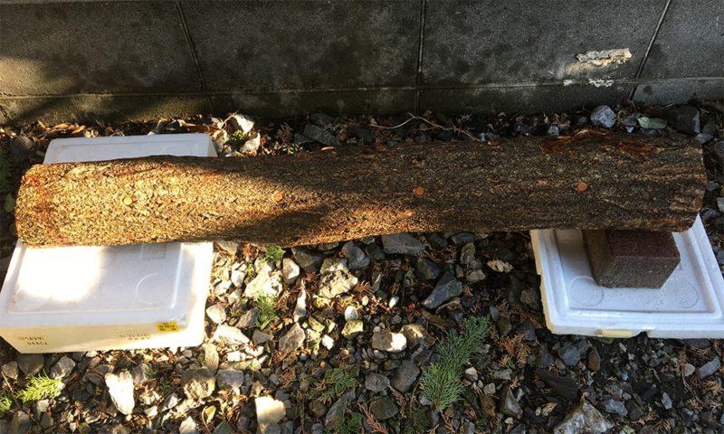 ホダ木に水をかけます