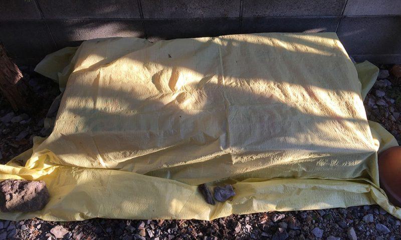 ホダ木の上にダンボールをかけ、その上からビニールシートで覆います。