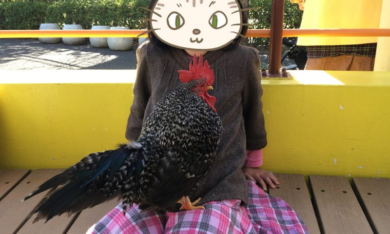 ニワトリと長女