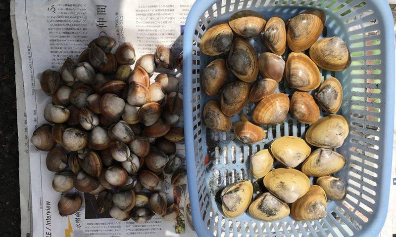 シオフキ(左)とバカ貝(右)