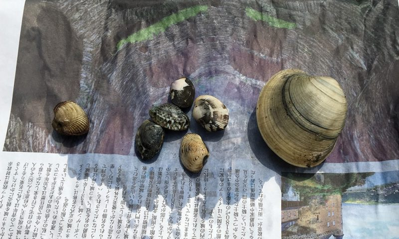 サルボウ、アサリ、ホンビノス