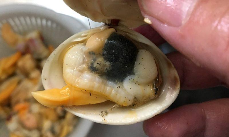 バカ貝の下処理