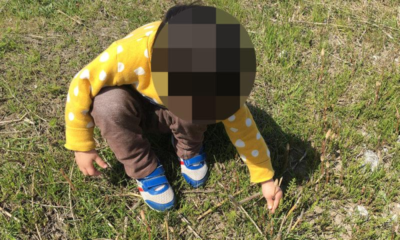 つくし初採集の次男(3歳)