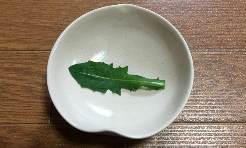 たんぽぽの葉