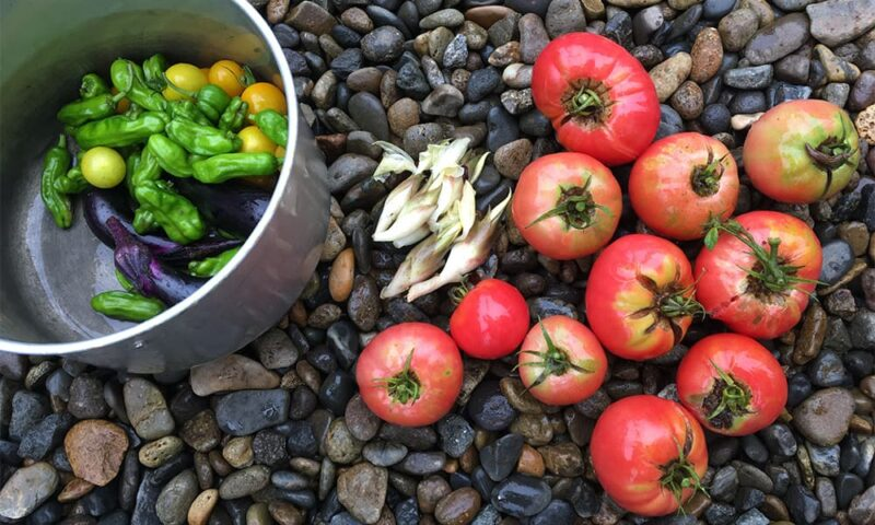 実家の家庭菜園での収穫