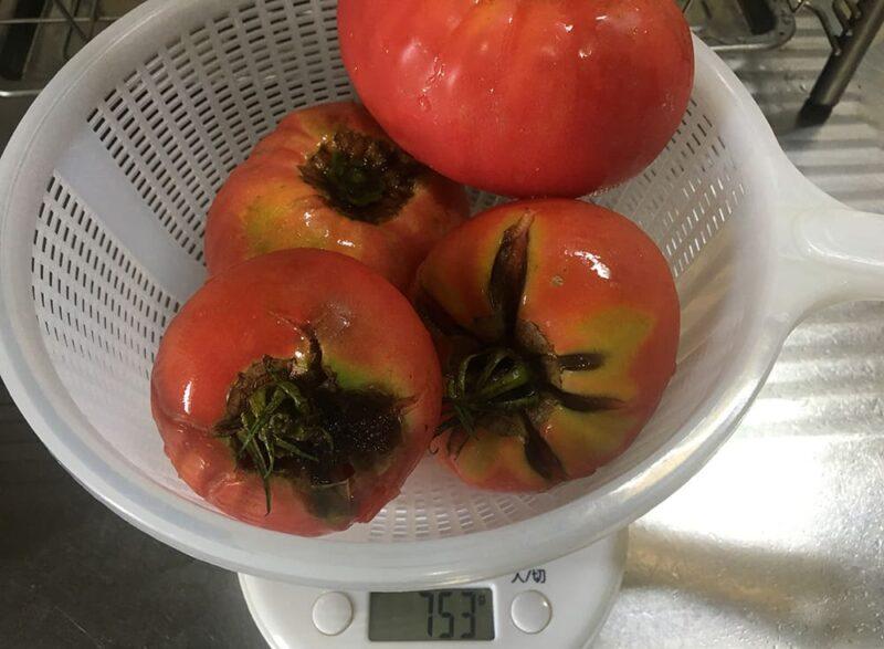 軸の部分が腐りかけているトマト