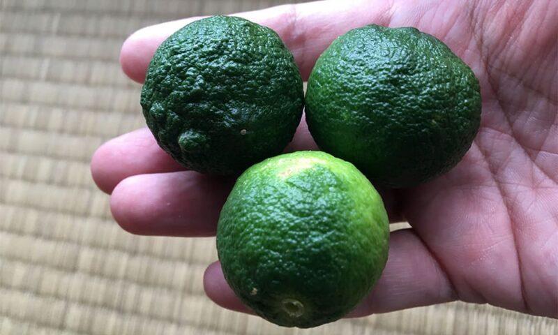 今回収穫した柑橘