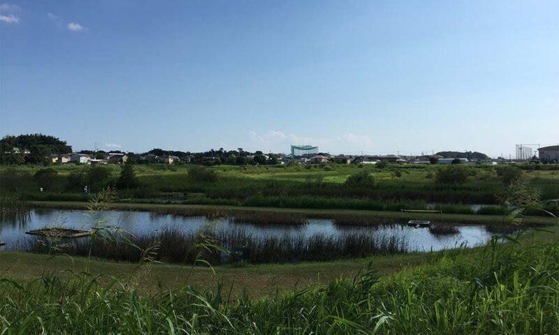 大柏川第一調整池緑地の池