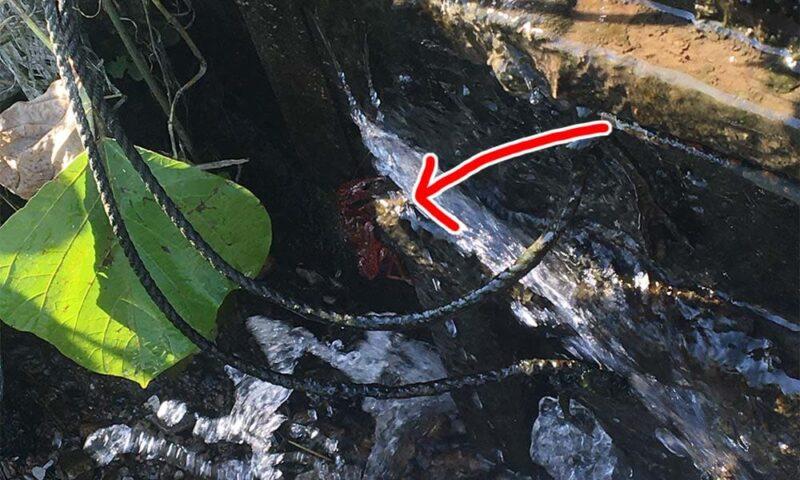 用水路の水の排出口にはりついているザリガニ