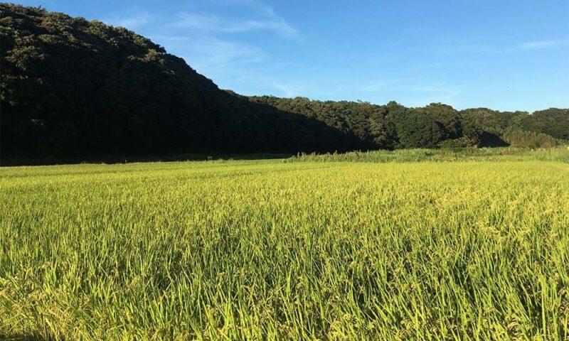 水田の風景写真