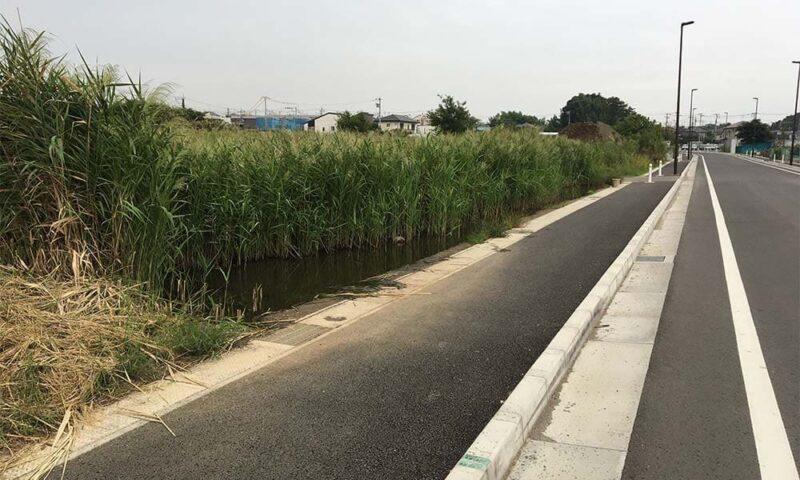 整備された道路のすぐ横に謎の湿地