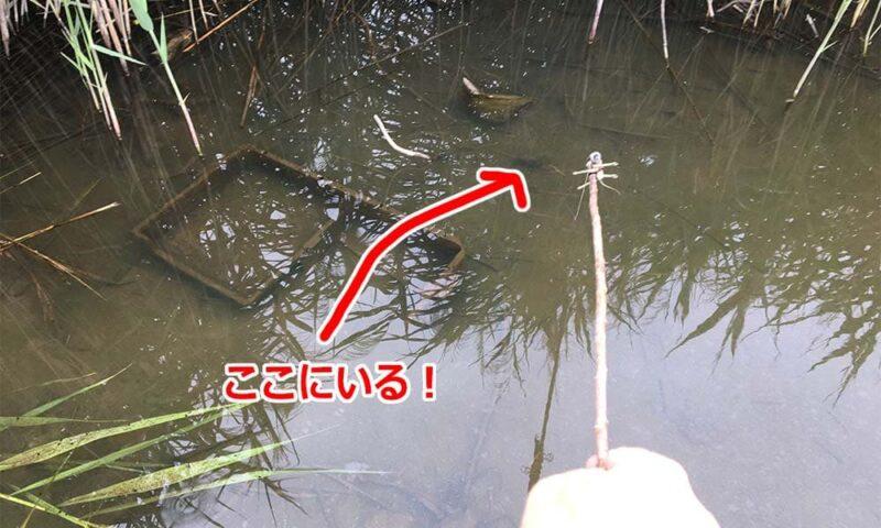 ザリガニ釣りの様子