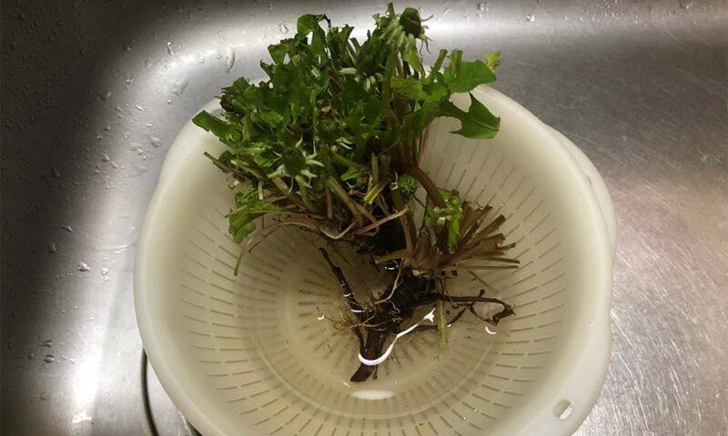 根に水を吸わせます