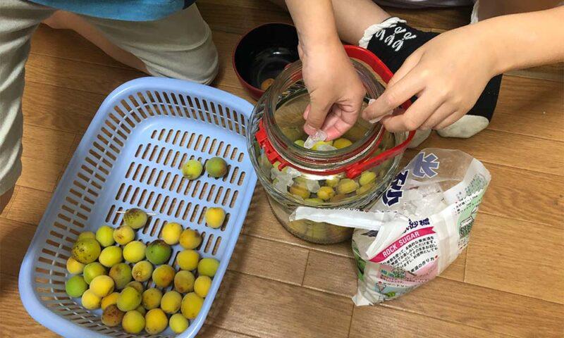 長女も梅シロップ作りに合流
