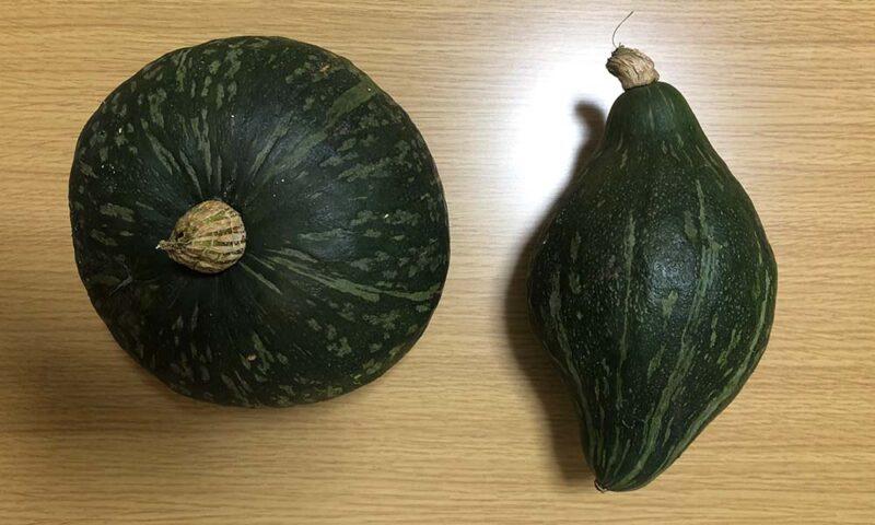 普通のかぼちゃと変わりかぼちゃ